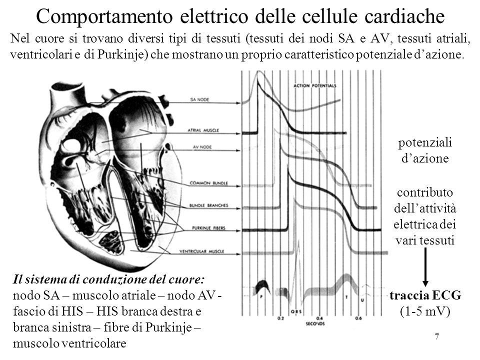 7 Comportamento elettrico delle cellule cardiache Nel cuore si trovano diversi tipi di tessuti (tessuti dei nodi SA e AV, tessuti atriali, ventricolar