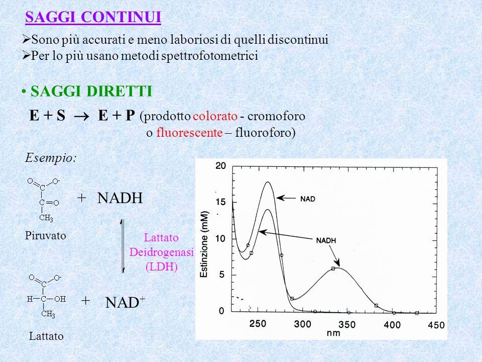 SAGGI CONTINUI Sono più accurati e meno laboriosi di quelli discontinui Per lo più usano metodi spettrofotometrici SAGGI DIRETTI E + S E + P (prodotto