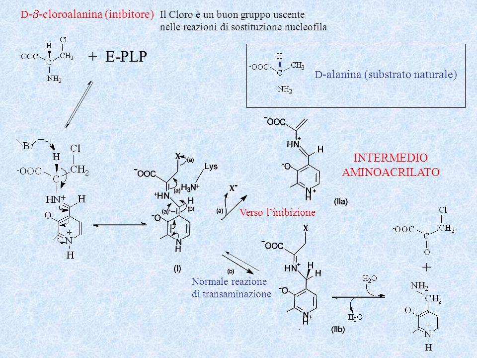 D -alanina (substrato naturale) D - -cloroalanina (inibitore) + E-PLP Il Cloro è un buon gruppo uscente nelle reazioni di sostituzione nucleofila Norm