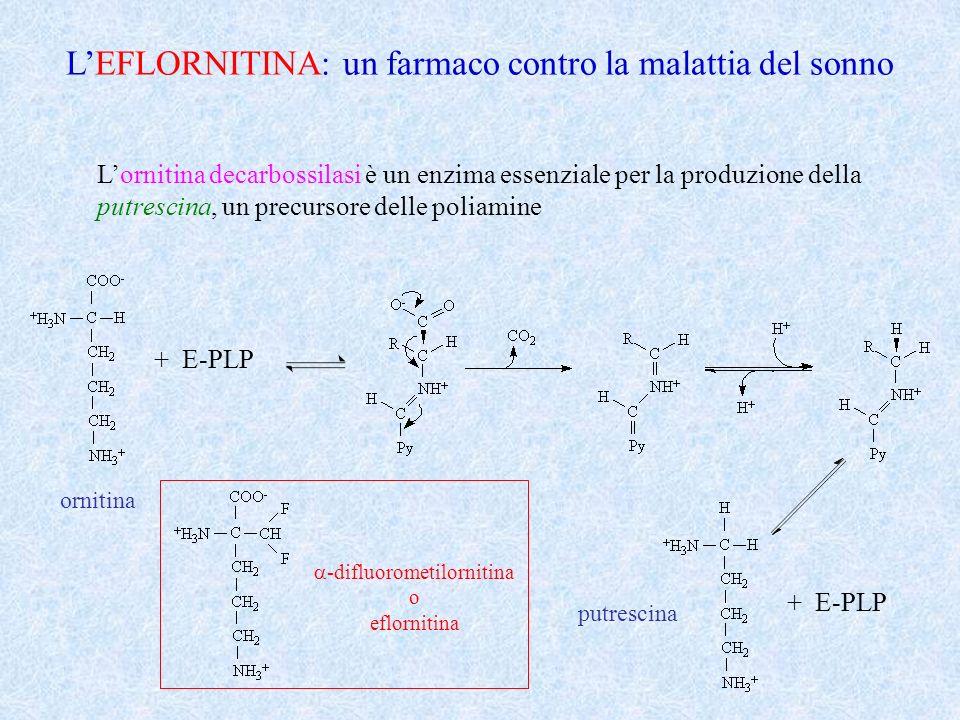 LEFLORNITINA: un farmaco contro la malattia del sonno Lornitina decarbossilasi è un enzima essenziale per la produzione della putrescina, un precursor