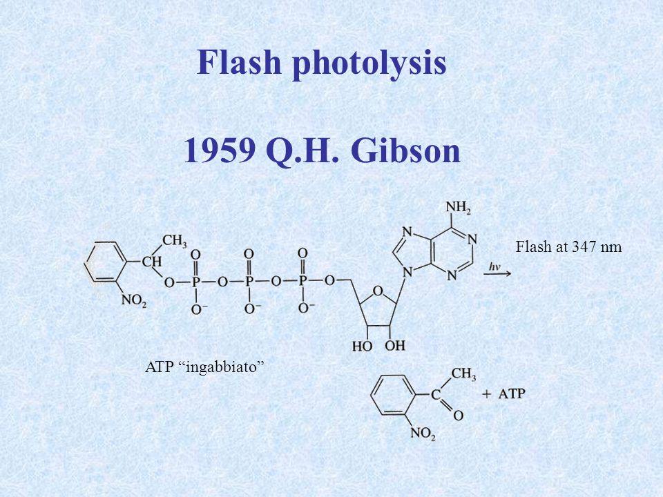 LEFLORNITINA: un farmaco contro la malattia del sonno Lornitina decarbossilasi è un enzima essenziale per la produzione della putrescina, un precursore delle poliamine + E-PLP ornitina putrescina -difluorometilornitina o eflornitina