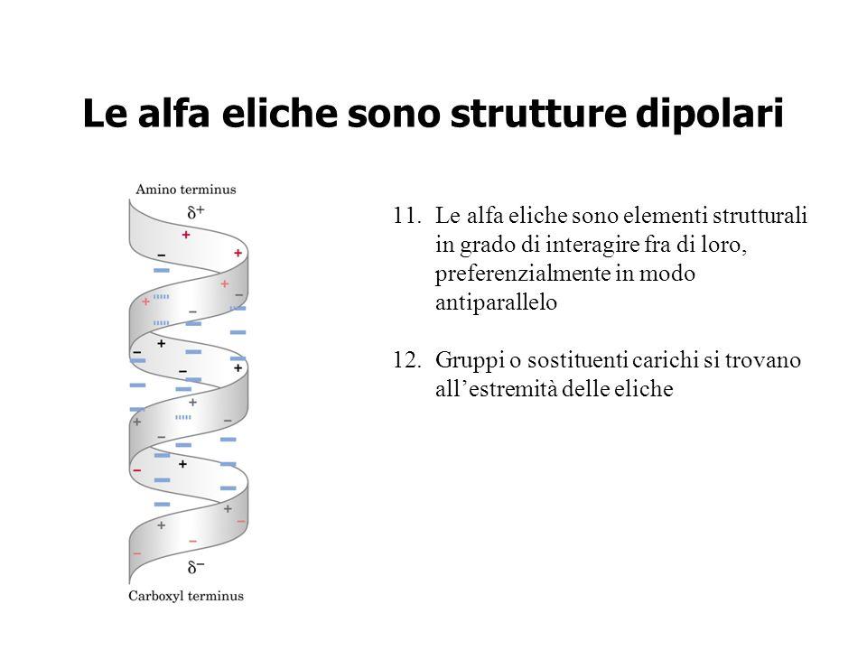 Le alfa eliche sono strutture dipolari 11.Le alfa eliche sono elementi strutturali in grado di interagire fra di loro, preferenzialmente in modo antip
