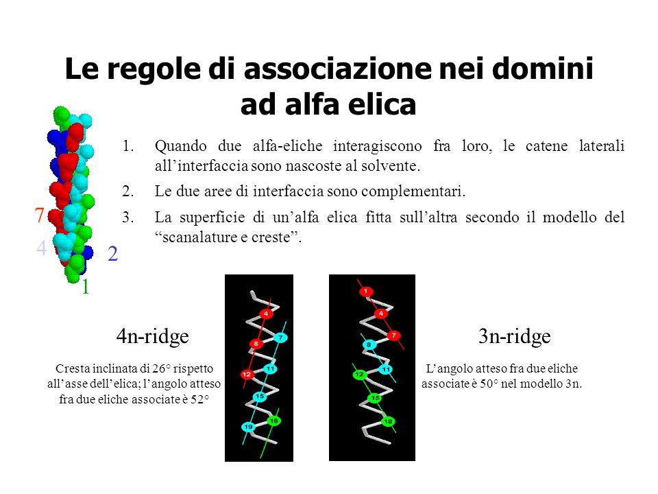 Le regole di associazione nei domini ad alfa elica 1.Quando due alfa-eliche interagiscono fra loro, le catene laterali allinterfaccia sono nascoste al