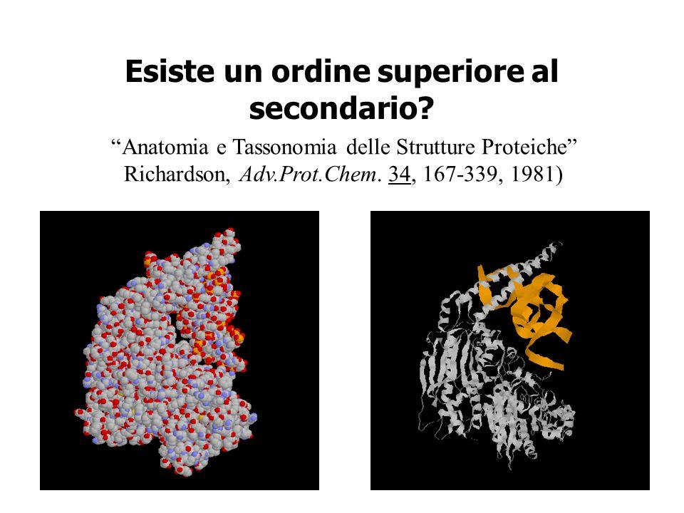Esiste un ordine superiore al secondario? Anatomia e Tassonomia delle Strutture Proteiche Richardson, Adv.Prot.Chem. 34, 167-339, 1981)