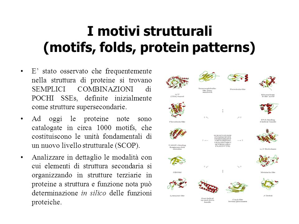 I motivi strutturali (motifs, folds, protein patterns) E stato osservato che frequentemente nella struttura di proteine si trovano SEMPLICI COMBINAZIO