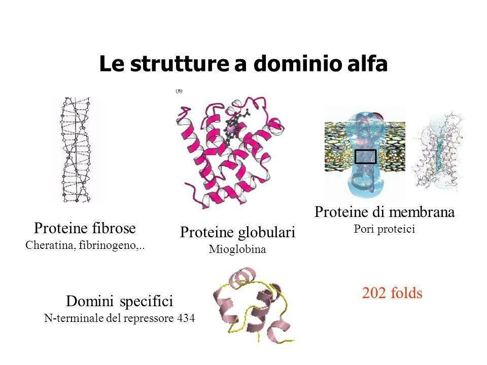 Le strutture a dominio alfa Proteine globulari Mioglobina Domini specifici N-terminale del repressore 434 Proteine fibrose Cheratina, fibrinogeno,.. P