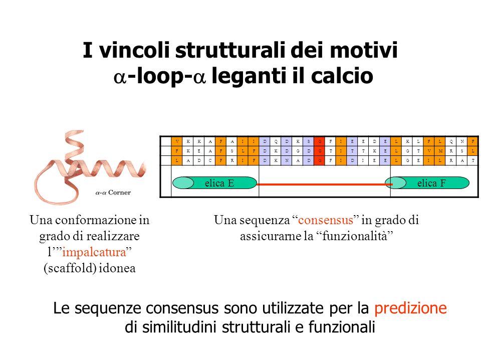 I vincoli strutturali dei motivi -loop- leganti il calcio Una conformazione in grado di realizzare limpalcatura (scaffold) idonea Una sequenza consens