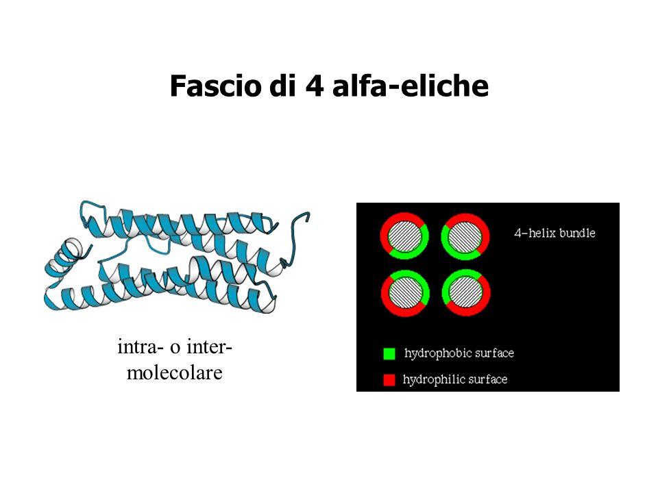 Fascio di 4 alfa-eliche intra- o inter- molecolare
