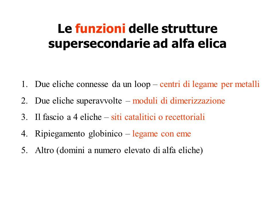 Le funzioni delle strutture supersecondarie ad alfa elica 1.Due eliche connesse da un loop – centri di legame per metalli 2.Due eliche superavvolte –