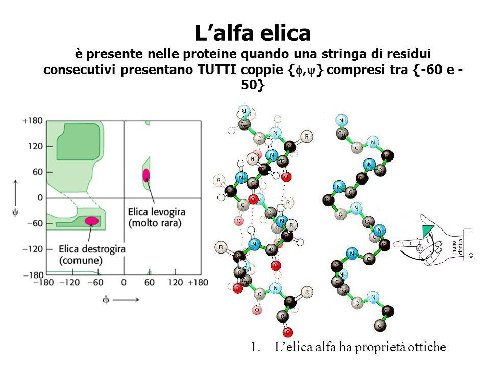 La coppia di {, } dellalfa elica comporta conseguenze strutturali essenziali nella stabilità e nella funzione proteica 2.La formazione di un legame idrogeno tra tutti gli NH e i CO compresi nella struttura.