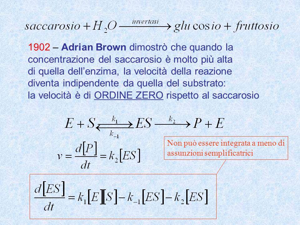 1902 – Adrian Brown dimostrò che quando la concentrazione del saccarosio è molto più alta di quella dellenzima, la velocità della reazione diventa ind