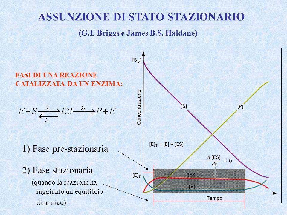 1) Fase pre-stazionaria 2) Fase stazionaria (quando la reazione ha raggiunto un equilibrio dinamico) ASSUNZIONE DI STATO STAZIONARIO FASI DI UNA REAZI