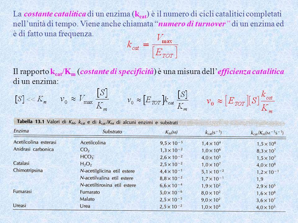 Il rapporto k cat /K m (costante di specificità) è una misura dellefficienza catalitica di un enzima: La costante catalitica di un enzima (k cat ) è i