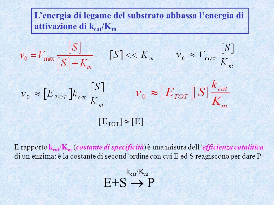 att E+S ES ES ± E+P k cat /K m RT ln(k cat /K m ) = RT ln(K B T/h) - G att G S G ± E+S ES ± E+P G att RT ln(k cat /K m ) = RT ln(K B T/h) - G ± - G S G att = G ± + G S att