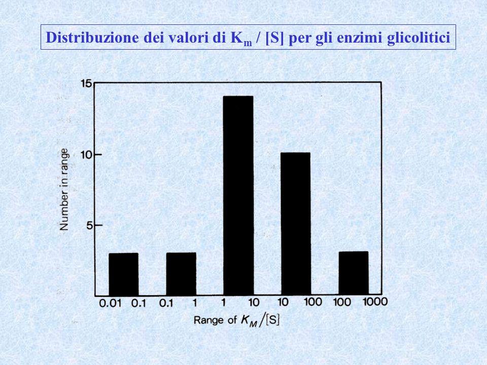Distribuzione dei valori di K m / [S] per gli enzimi glicolitici