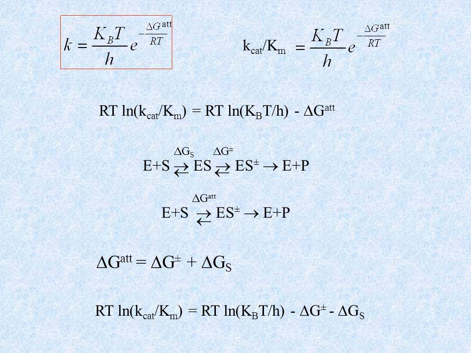 att E+S ES ES ± E+P k cat /K m RT ln(k cat /K m ) = RT ln(K B T/h) - G att G S G ± E+S ES ± E+P G att RT ln(k cat /K m ) = RT ln(K B T/h) - G ± - G S