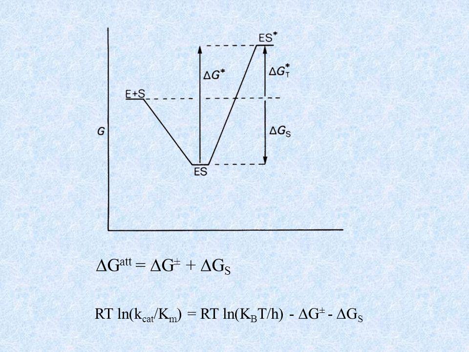 La massima energia di legame tra enzima e substrato si ha quando ogni gruppo chimico del substrato viene alloggiato in un sito complementare dellenzima.