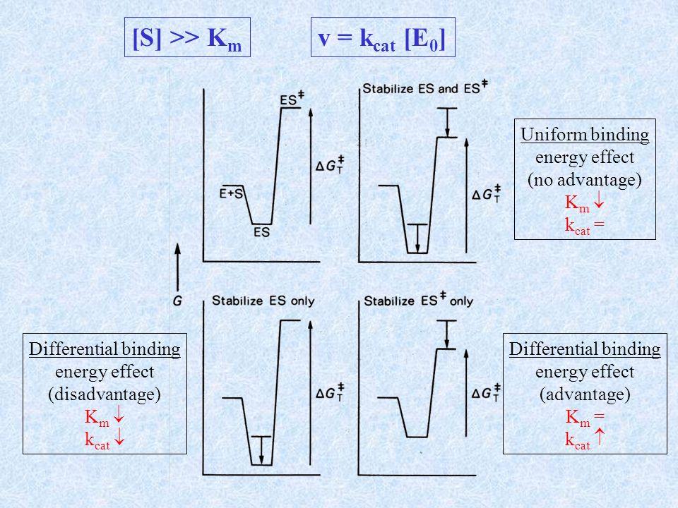 [S] << K m v = k cat /Km [S][E] Uniform binding energy effect (advantage) K m k cat Differential binding energy effect (mild advantage) K m k cat = Differential binding energy effect (advantage) K m = k cat