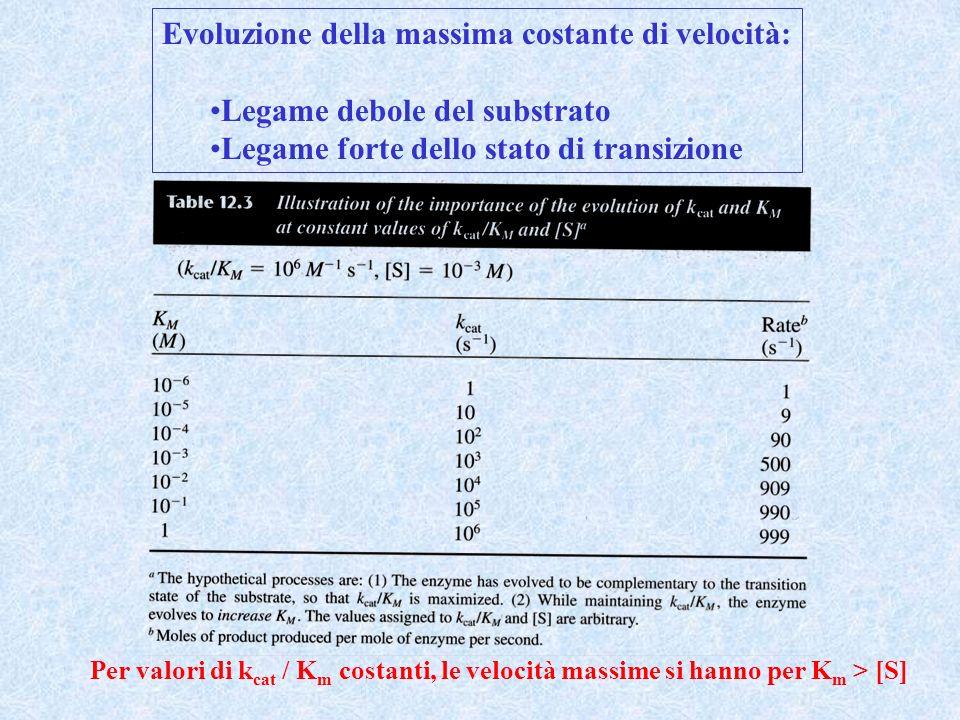 Evoluzione della massima costante di velocità: Legame debole del substrato Legame forte dello stato di transizione Per valori di k cat / K m costanti,