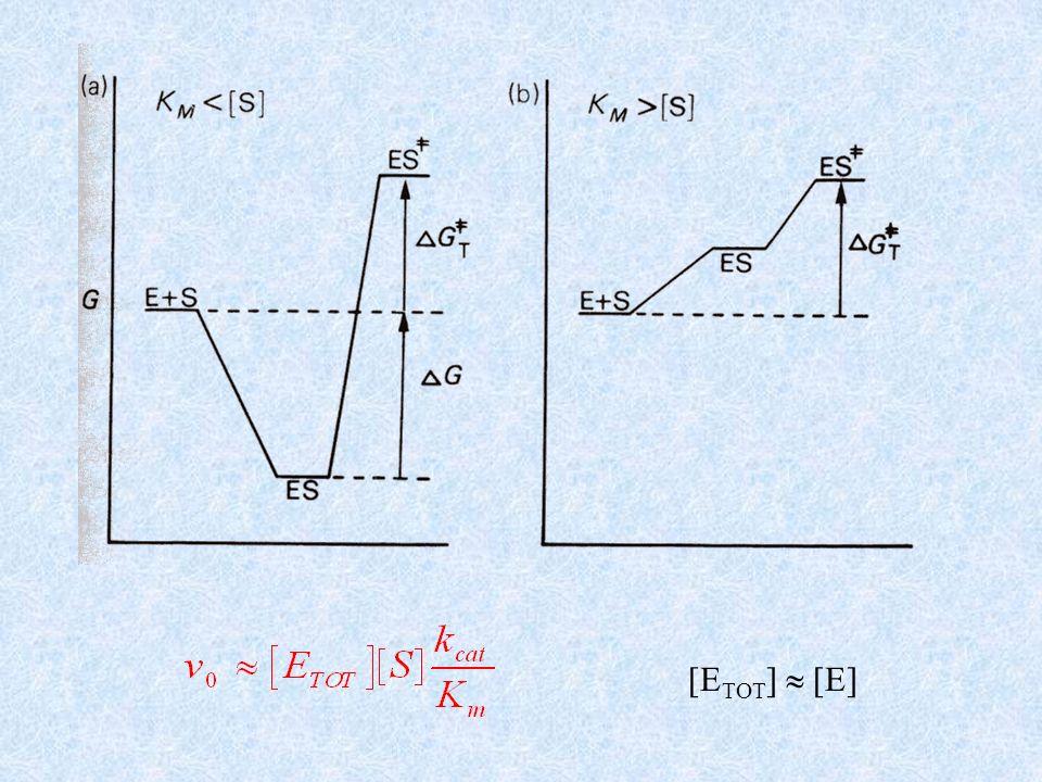 Fanno eccezione gli enzimi che catalizzano tappe di controllo 1.Il valore di k cat /K m è massimo se lenzima è complementare allo stato di transizione.