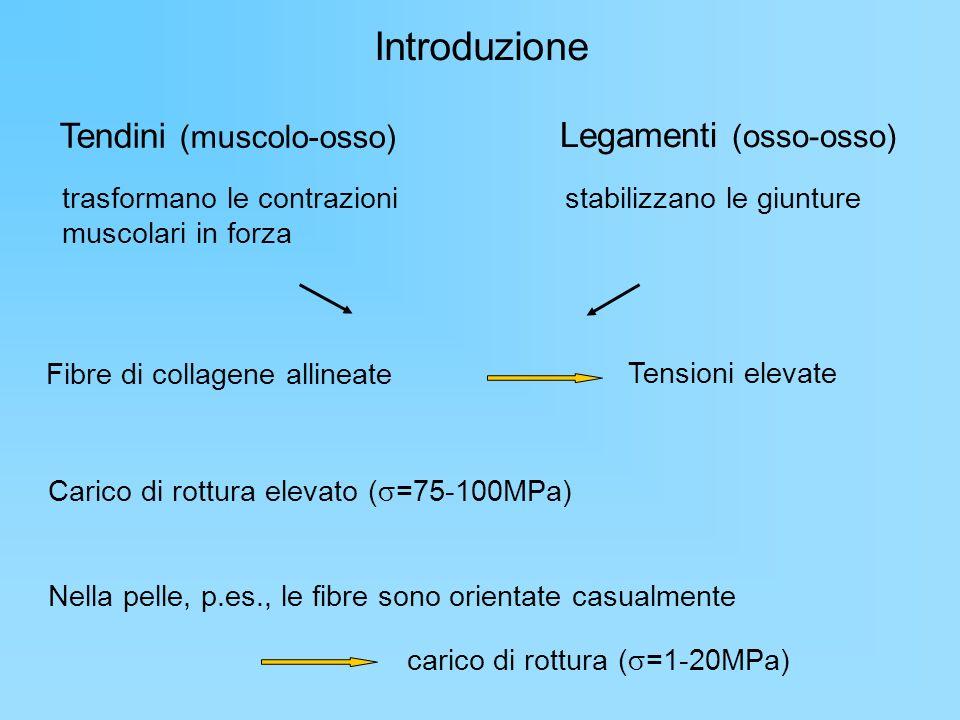 Introduzione Tendini (muscolo-osso) Legamenti (osso-osso) trasformano le contrazioni muscolari in forza stabilizzano le giunture Fibre di collagene al