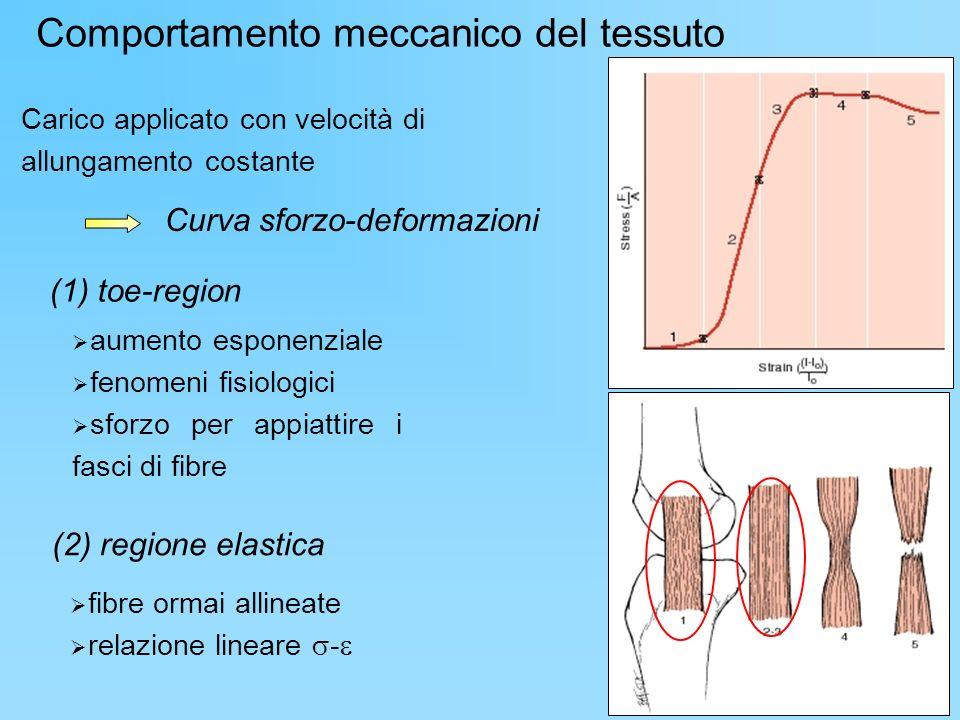 Curva sforzo-deformazioni Carico applicato con velocità di allungamento costante Comportamento meccanico del tessuto aumento esponenziale fenomeni fis