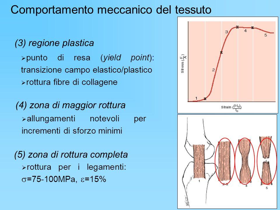 (3) regione plastica punto di resa (yield point): transizione campo elastico/plastico rottura fibre di collagene (4) zona di maggior rottura allungame