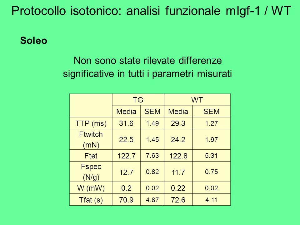 Soleo Non sono state rilevate differenze significative in tutti i parametri misurati TGWT MediaSEMMediaSEM TTP (ms)31.6 1.49 29.3 1.27 Ftwitch (mN) 22