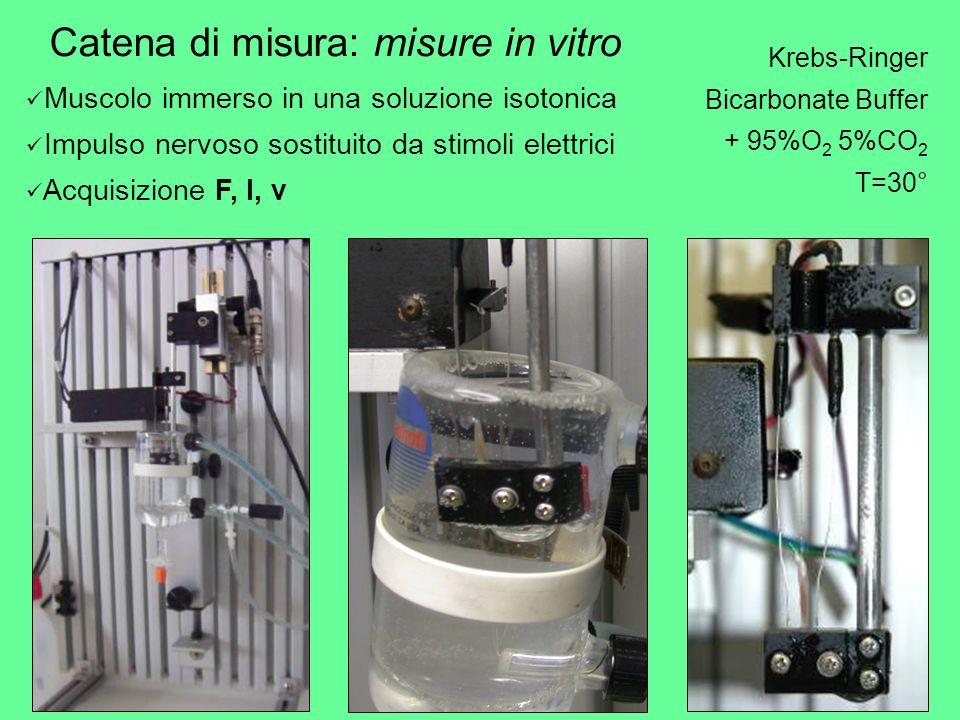 Krebs-Ringer Bicarbonate Buffer + 95%O 2 5%CO 2 T=30° Catena di misura: misure in vitro Muscolo immerso in una soluzione isotonica Impulso nervoso sos