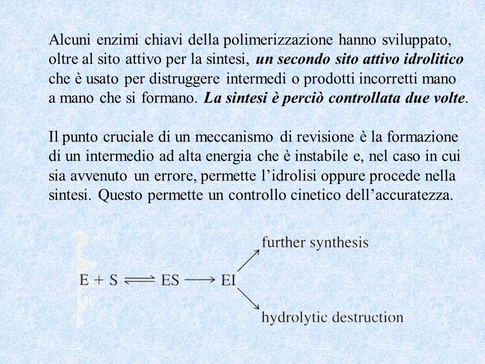 Alcuni enzimi chiavi della polimerizzazione hanno sviluppato, oltre al sito attivo per la sintesi, un secondo sito attivo idrolitico che è usato per distruggere intermedi o prodotti incorretti mano a mano che si formano.