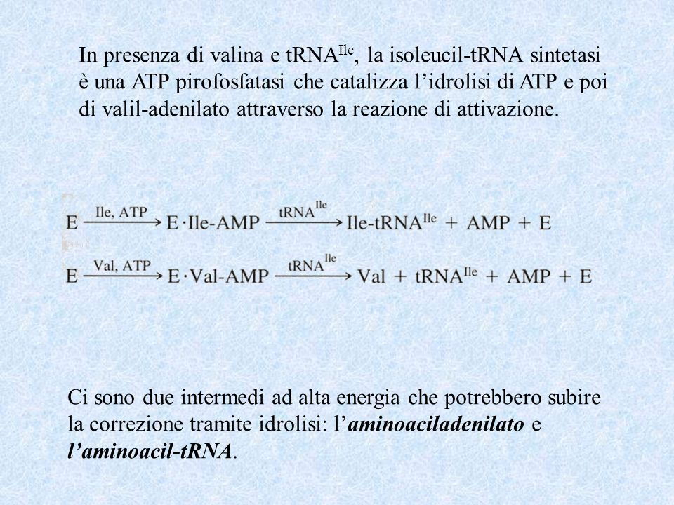 In presenza di valina e tRNA Ile, la isoleucil-tRNA sintetasi è una ATP pirofosfatasi che catalizza lidrolisi di ATP e poi di valil-adenilato attraverso la reazione di attivazione.