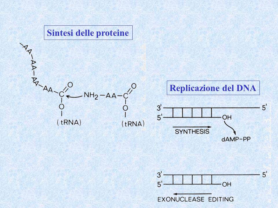 Sintesi delle proteine Replicazione del DNA