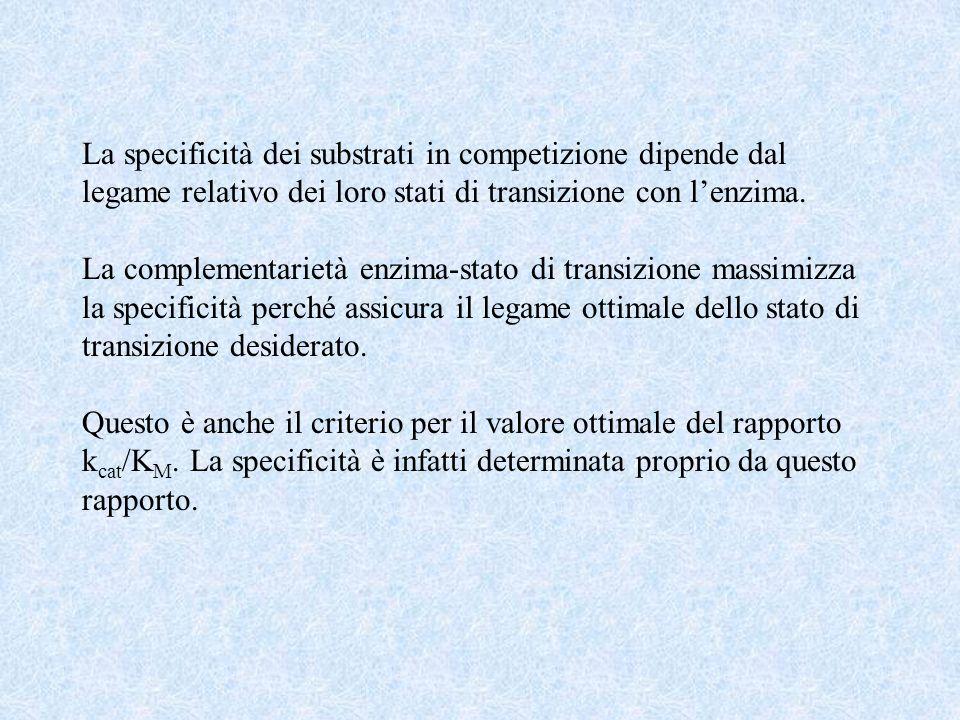 La specificità dei substrati in competizione dipende dal legame relativo dei loro stati di transizione con lenzima.