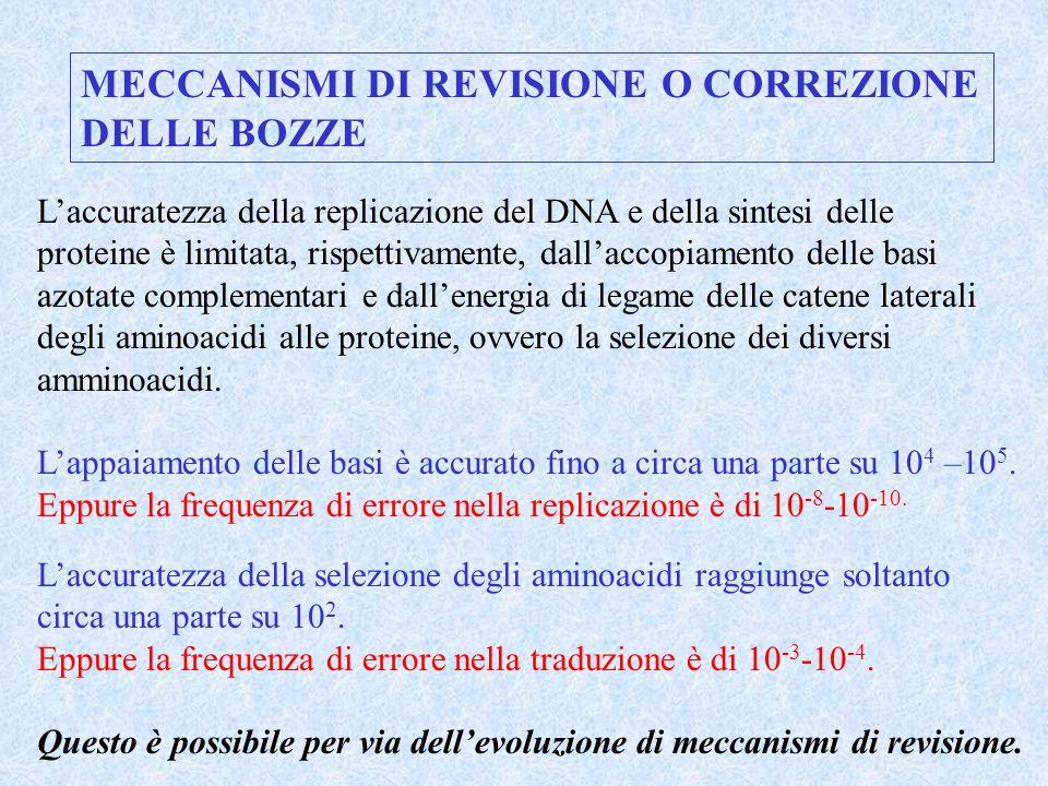 MECCANISMI DI REVISIONE O CORREZIONE DELLE BOZZE Laccuratezza della replicazione del DNA e della sintesi delle proteine è limitata, rispettivamente, d
