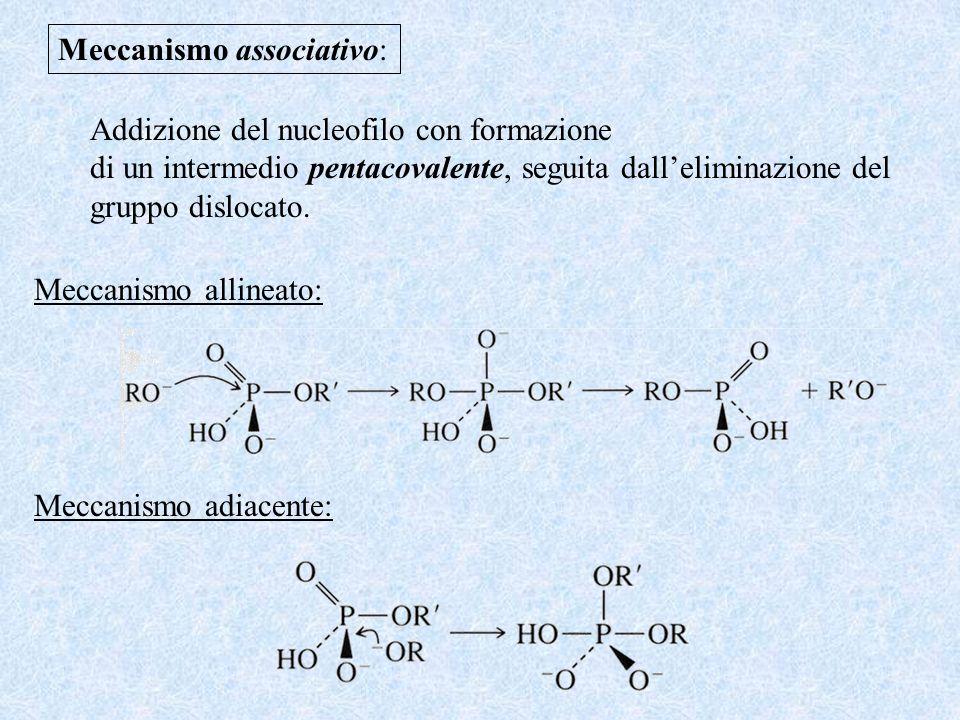 Meccanismo associativo: Addizione del nucleofilo con formazione di un intermedio pentacovalente, seguita dalleliminazione del gruppo dislocato. Meccan