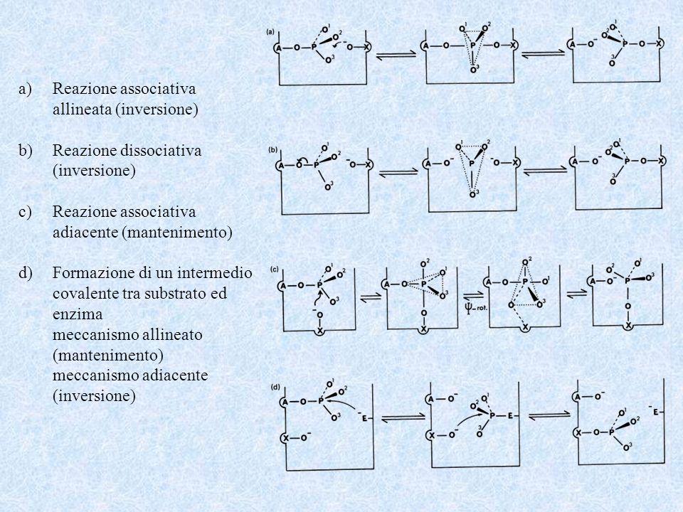 a)Reazione associativa allineata (inversione) b)Reazione dissociativa (inversione) c)Reazione associativa adiacente (mantenimento) d)Formazione di un