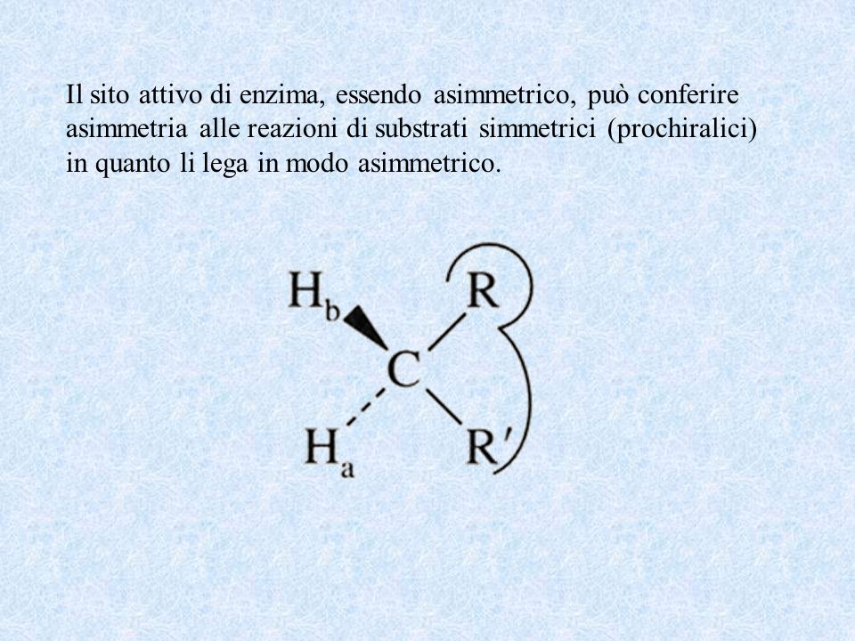 Il sito attivo di enzima, essendo asimmetrico, può conferire asimmetria alle reazioni di substrati simmetrici (prochiralici) in quanto li lega in modo