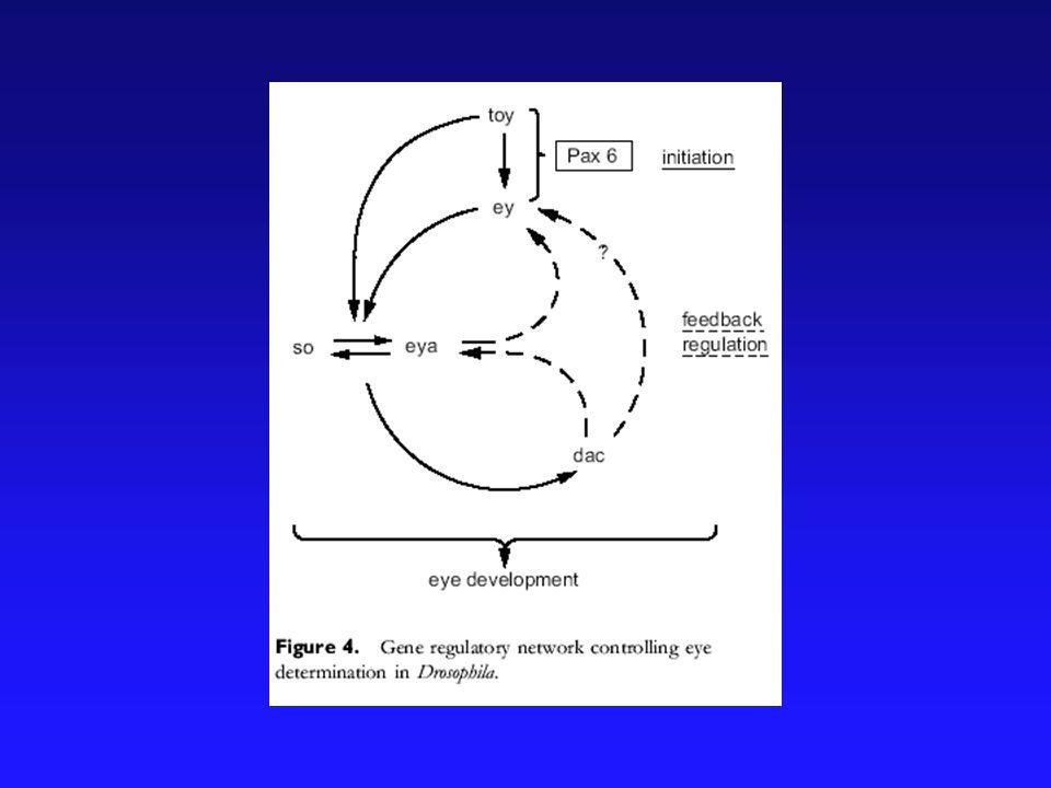 Mappa del destino del disco dellocchio e dellantenna