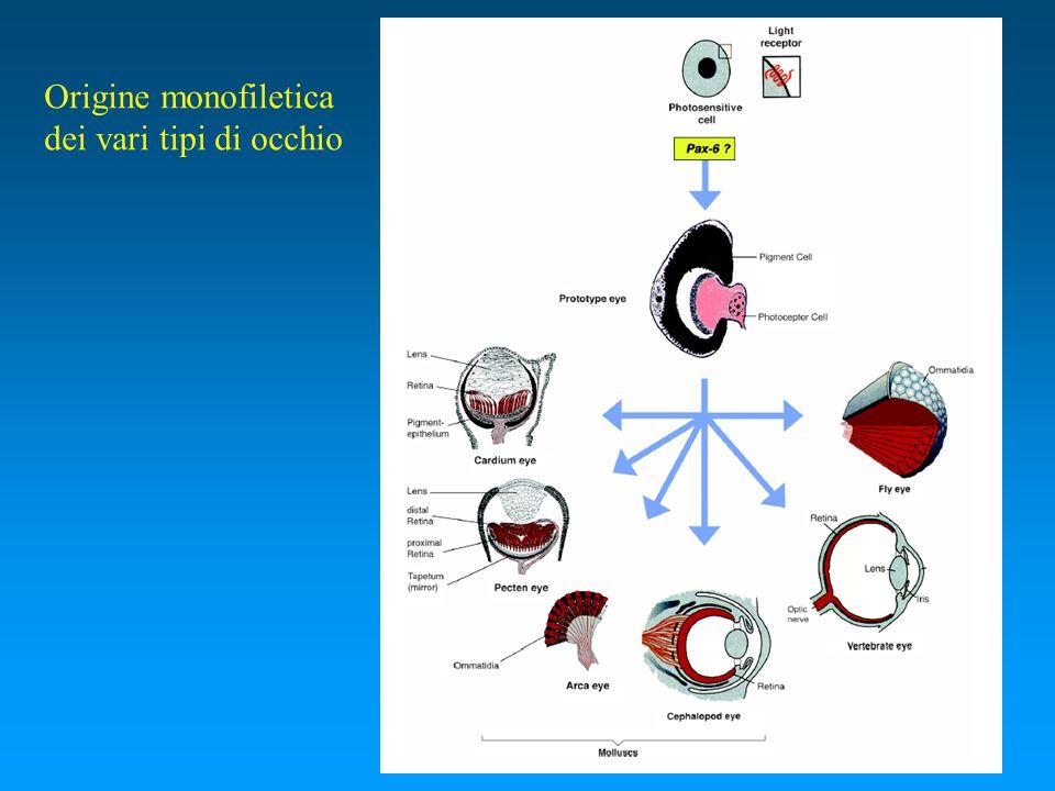 Origine monofiletica dei vari tipi di occhio