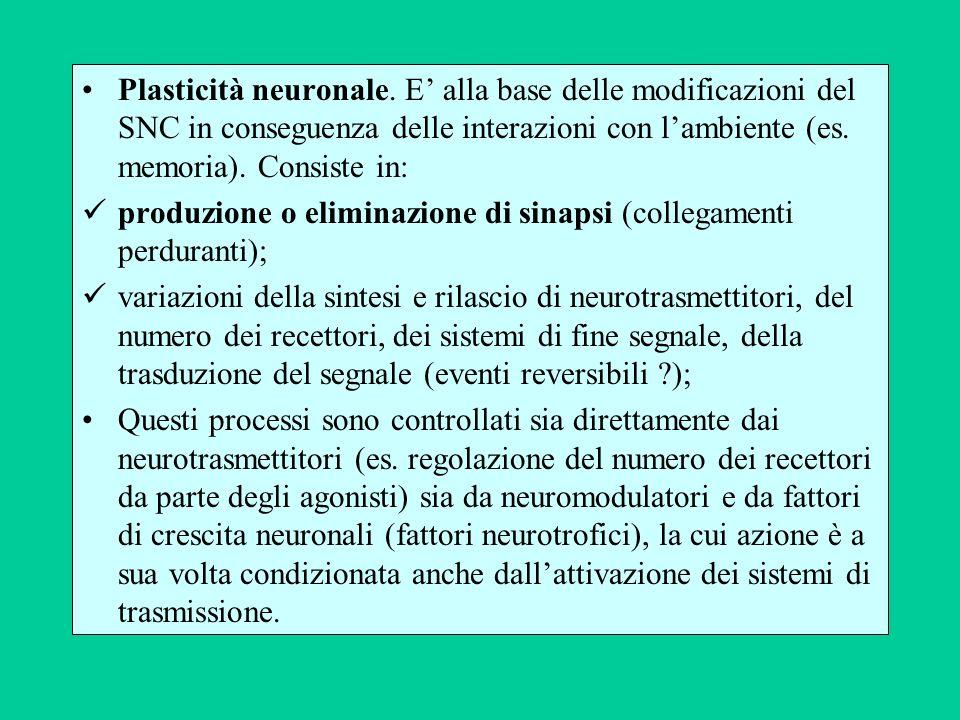 Plasticità neuronale. E alla base delle modificazioni del SNC in conseguenza delle interazioni con lambiente (es. memoria). Consiste in: produzione o