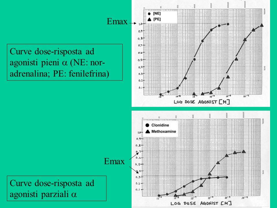 Curve dose-risposta ad agonisti pieni (NE: nor- adrenalina; PE: fenilefrina) Curve dose-risposta ad agonisti parziali Emax