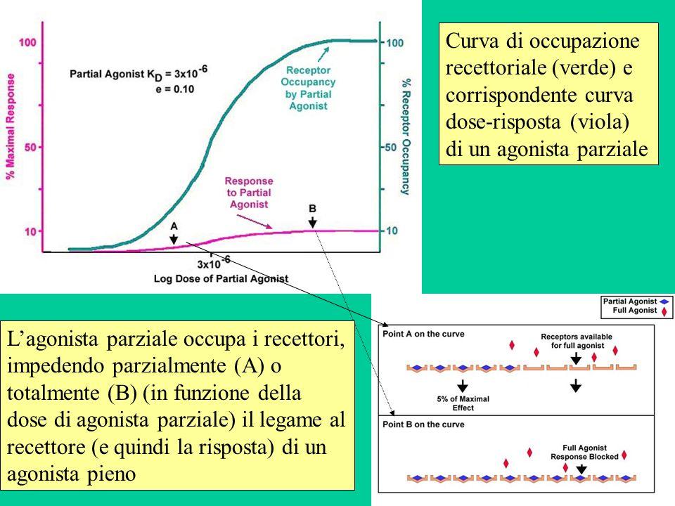 Curva di occupazione recettoriale (verde) e corrispondente curva dose-risposta (viola) di un agonista parziale Lagonista parziale occupa i recettori,