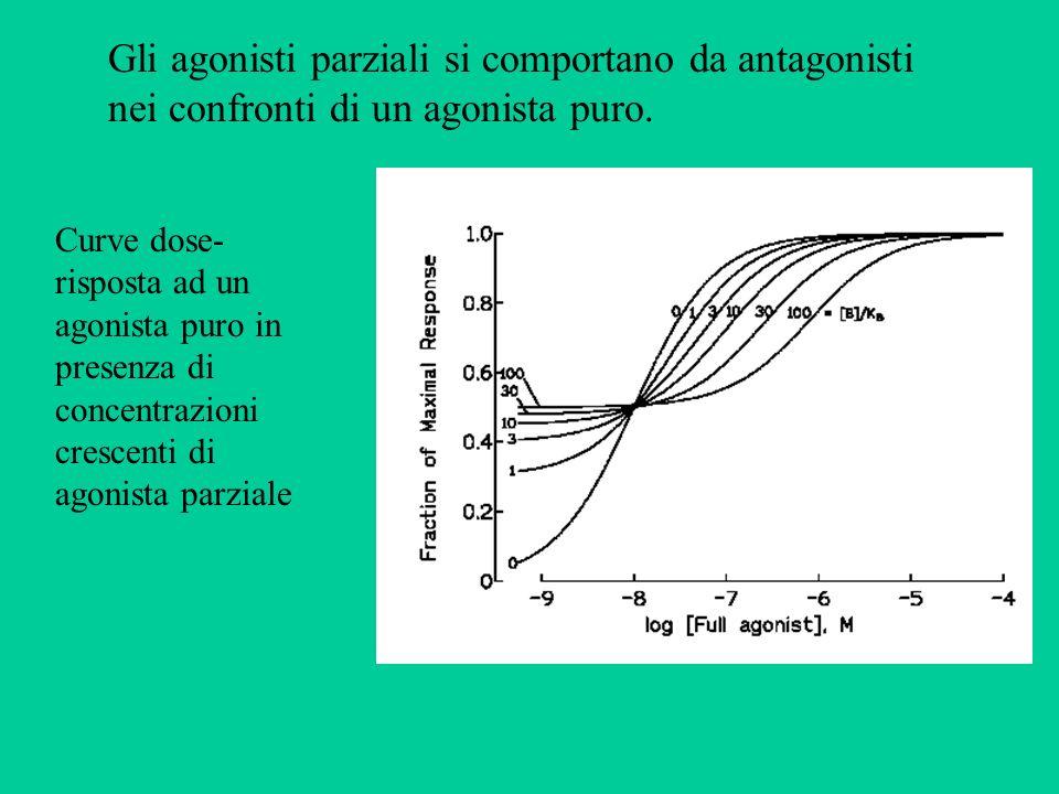 Gli agonisti parziali si comportano da antagonisti nei confronti di un agonista puro. Curve dose- risposta ad un agonista puro in presenza di concentr