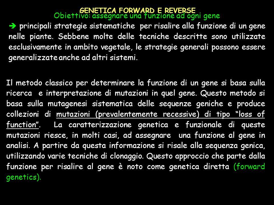 GENETICA FORWARD E REVERSE Obiettivo: assegnare una funzione ad ogni gene principali strategie sistematiche per risalire alla funzione di un gene nell