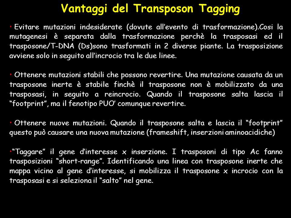 Evitare mutazioni indesiderate (dovute allevento di trasformazione).Cosi la mutagenesi è separata dalla trasformazione perchè la trasposasi ed il tras