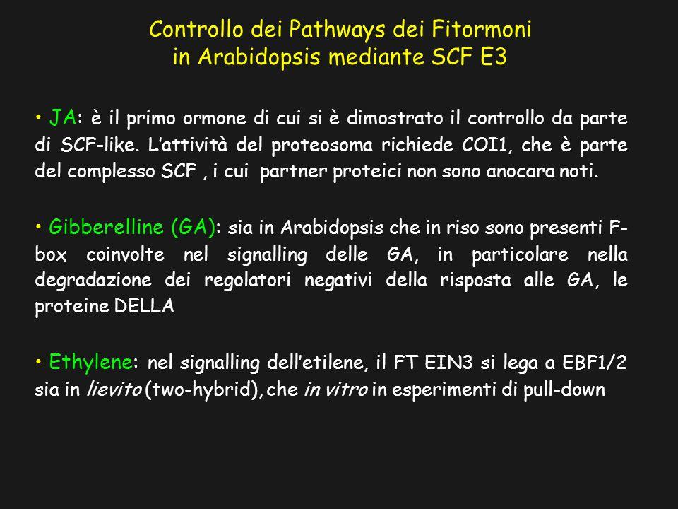 Controllo dei Pathways dei Fitormoni in Arabidopsis mediante SCF E3 JA: è il primo ormone di cui si è dimostrato il controllo da parte di SCF-like. La