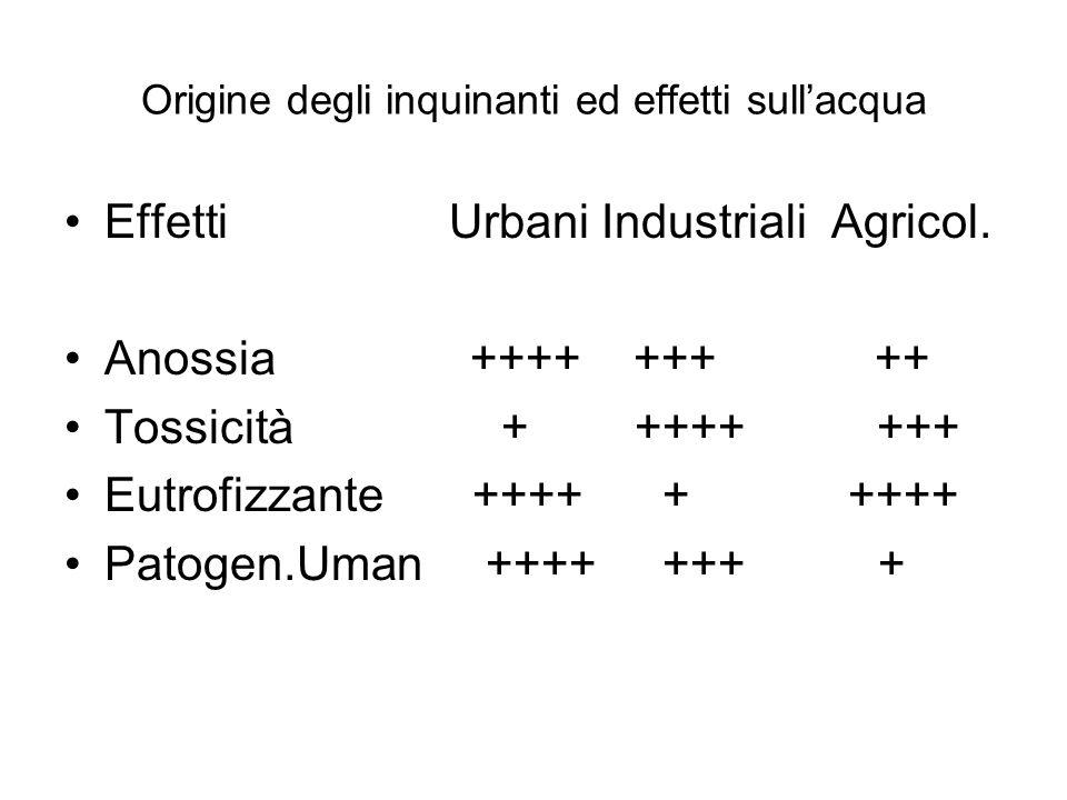 Origine degli inquinanti ed effetti sullacqua Effetti Urbani Industriali Agricol. Anossia ++++ +++ ++ Tossicità + ++++ +++ Eutrofizzante ++++ + ++++ P