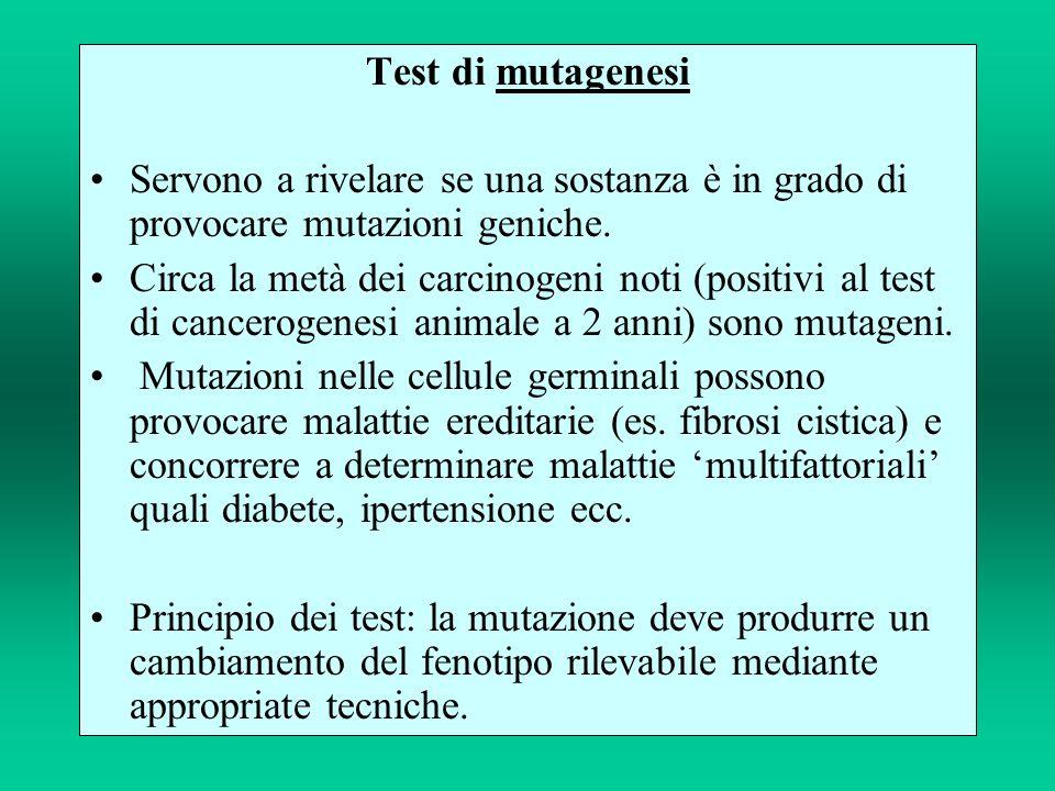 Test di mutagenesi Servono a rivelare se una sostanza è in grado di provocare mutazioni geniche. Circa la metà dei carcinogeni noti (positivi al test