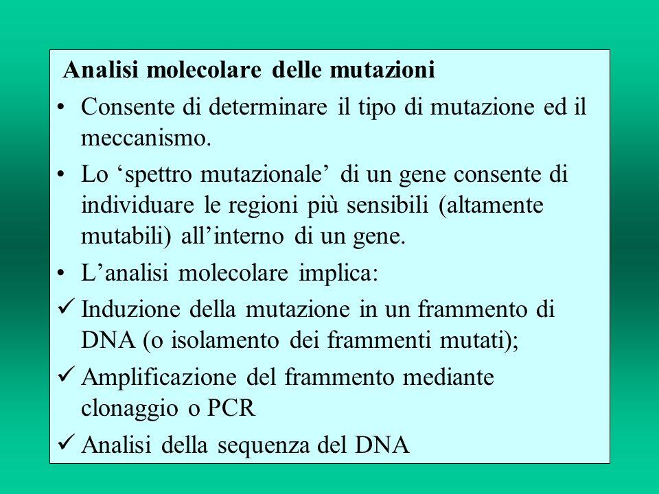 Analisi molecolare delle mutazioni Consente di determinare il tipo di mutazione ed il meccanismo. Lo spettro mutazionale di un gene consente di indivi