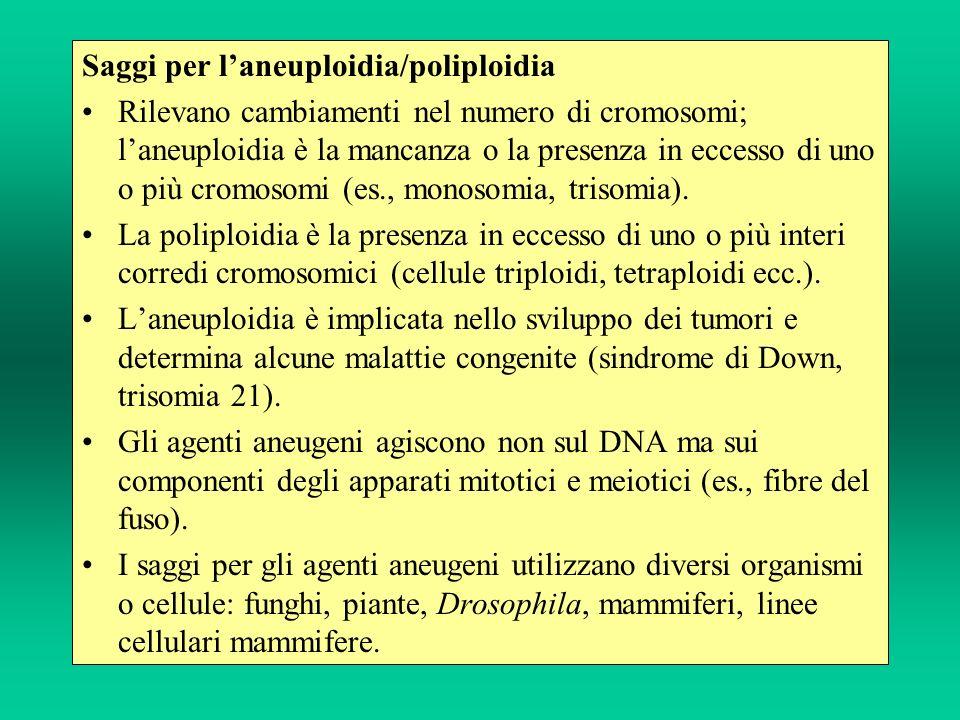 Saggi per laneuploidia/poliploidia Rilevano cambiamenti nel numero di cromosomi; laneuploidia è la mancanza o la presenza in eccesso di uno o più crom